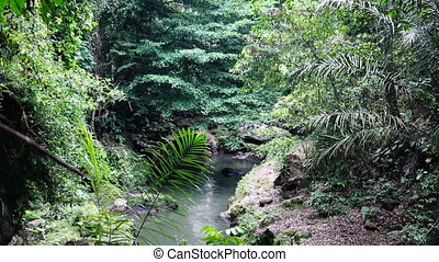 River in the lowland of jungle. - Dreamlike image of river...
