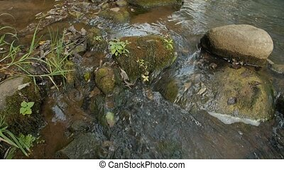 Creek in a Forest - A clear creek in a forest. - Creek in a...