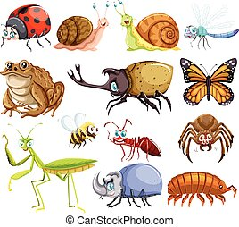 Different kinds of bugs
