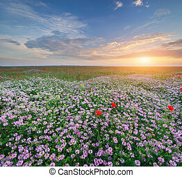 Spring flowers in meadow Beautiful landscapes