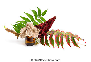 Drupes of a staghorn sumac - Drupes of a staghorn sumac with...