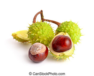 Horse-chestnut (Aesculus) fruits. Isolated on white...
