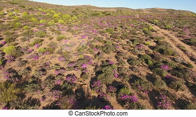 Aerial view of wild flowers - Low flying aerial view of the...