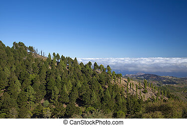 Central Gran Canaria, view east over deep valley , canarian...