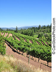 Wine country - California vineyard on a hillside