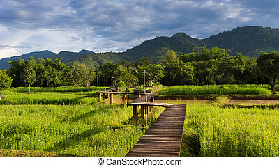 Wooden walkway over rice field with mountain background,...