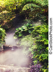 Misty Forest Stream - Forest Stream in a misty atmosphere