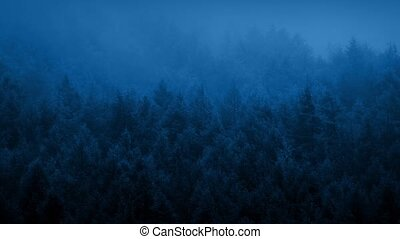 Mist Rolling Over Forest At Dawn - Moody wilderness...