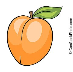 Apricot - Abstract vector illustration of an apricot