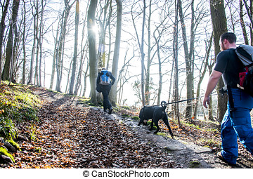 Hiking in the wood on a sunny day nature 2 - Hiking with...