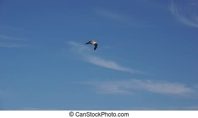 Seagull soaring in the blue sky