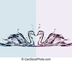 Colored Water Swans in Love - Two colored water swans in...