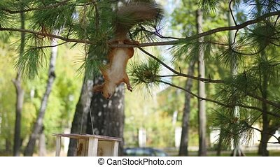 squirrel eating nuts from bird feeders