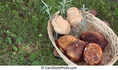 Mushrroms And Cheese - Basket with fresh porcini mushrooms...