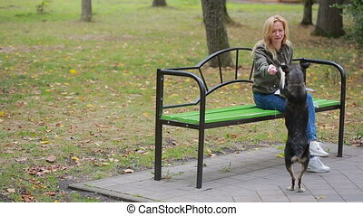 blonde Woman in a park feeding a stray mongrel dog - girl in...