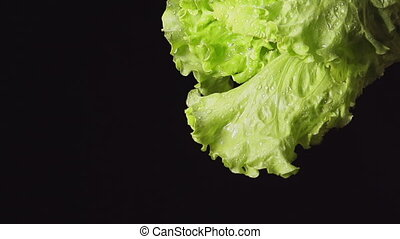 Human hand shakes a lettuce bunch - SLOW MOTION: A splash -...