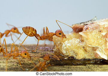 Ants at work teamwork concept
