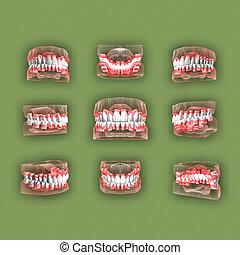 Foreshortening teeth.