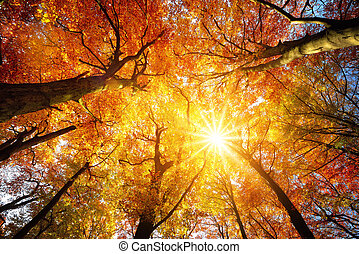 Autumn sun shining through tree canopy