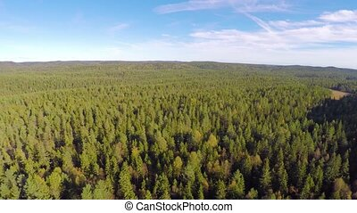 Flying high above large spruce tree forest - Camera flying...