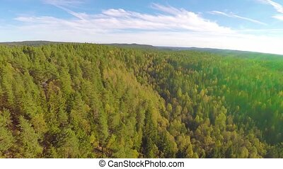 Camera flying high above large spruce tree forest - Camera...