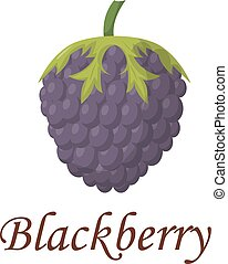 Blackberry vector illustration - Blackberry with leaves...