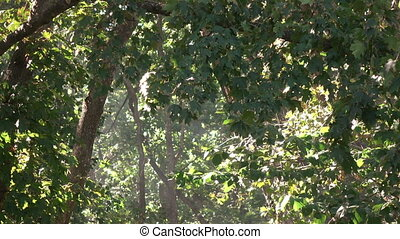 Smoke fire in forest - In deciduous forest in air Smoke from...