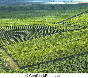 vineyards in Czech Republic