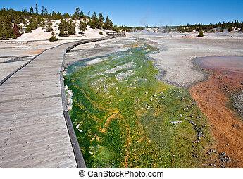Green Cyanidium Algae - Green cyanidium algae creates a...