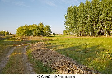 Barren field in the countryside - Dry grassy field in the...
