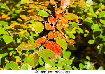 Branch with bright autumn leaves of red and orange.