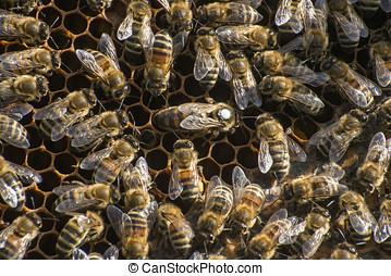 Honey bee beehive Wax Frame white mark queen 2 - Honey bee...
