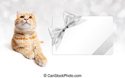 ginger cat and gift card with silver ribbon bow Isolated on...