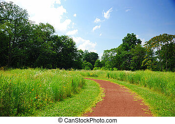 Quiet rural trail with trees, grass and blue cloudy sky