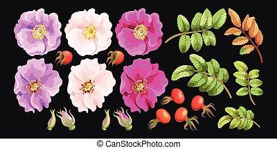 Set of sweet briar - Vector set of sweet briar flowers,...
