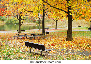 Autumn foliage in park by lake - Autumn yellow foliage in...