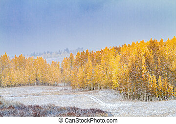 Fall Color and Snow in Colorado - Snow covered mountain road...