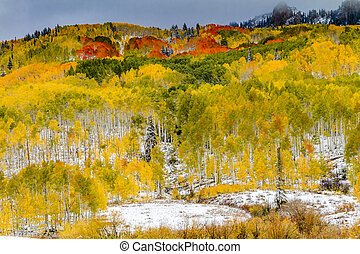 Fall Color and Snow in Colorado - Mountainside filled with...