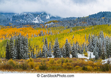 Fall Color and Snow in Colorado - Snowy autumn scene with...