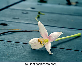 Indian cork flower on the wood floor in cinematic color....