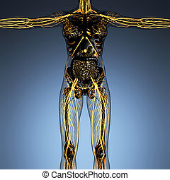 science anatomy of human body in x-ray with glow blood...