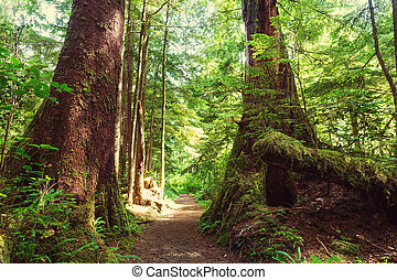 Vancouver forest - Rain forest in Vancouver island, British...