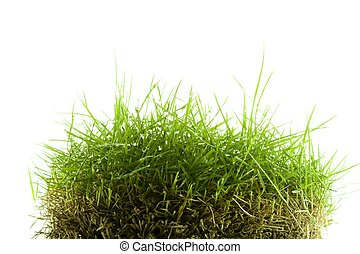 Mound of zoysia wet grass - Mound of wet Zoysia grass...