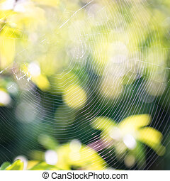 Cobweb in green garden, bokeh background.