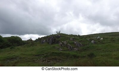 sheep grazing on hills of connemara in ireland 15 - nature...