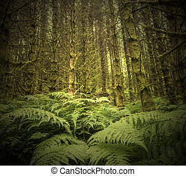 dark scary spruce tree forest - dark scary wet spruce tree...
