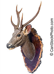 Deer head model mounted on wall isolated on white...