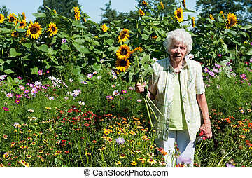Old lady is plucking sunflowers in the flower garden