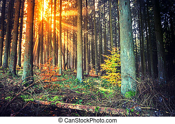 Autumn landscape with sunset in forest