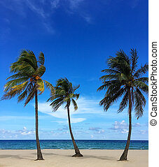 Untouched tropical beach with palms